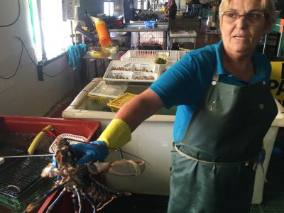 Live lobster at crustacean pools food or surroundings